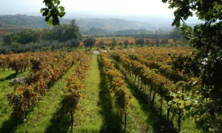Psr Campania: territorio rurale e nuova programmazione un incontro a San Bartolomeo in Galdo